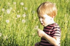 3 lat chłopiec podmuchowy dandelion w letnim dniu kosmos kopii zdjęcie royalty free