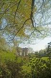 lat drzewa Zdjęcie Royalty Free