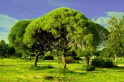 Lat drzewa mały kwadrat Obrazy Royalty Free