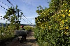 LAT du DA, VIETNAM, le 8 novembre 2018 : La campagne vietnamienne avec la fleur sauvage de tournesol en jaune le long de rue, Dal photographie stock libre de droits