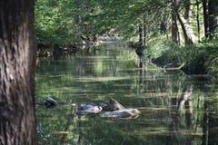 lat flod arkivbild