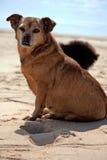 lat hund Arkivbilder