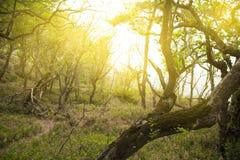 Lat kędzierzawi drewna w słońcu Fotografia Royalty Free