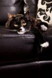 lat katt Arkivbilder