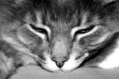 lat katt Royaltyfria Bilder