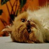 lat katt Arkivfoton