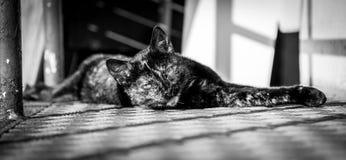 lat katt Fotografering för Bildbyråer