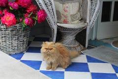 lat katt Royaltyfri Bild