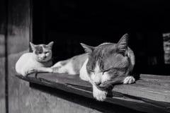 Lat katt på dagtid Royaltyfria Foton