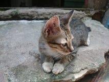 Lat katt, potthem Royaltyfri Foto