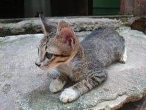 Lat katt, potthem Royaltyfri Fotografi