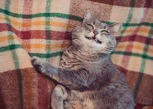 Lat katt som kopplar av på den mjuka filten Husdjur, livsstil, hemtrevlig höst eller vinterhelg, begrepp för kallt väder arkivbild