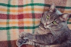 Lat katt som kopplar av på den mjuka filten Husdjur, livsstil, hemtrevlig höst eller vinterhelg, begrepp för kallt väder royaltyfri bild