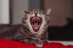Lat katt som kopplar av på den mjuka filten Husdjur, livsstil, hemtrevlig höst eller vinterhelg, begrepp för kallt väder royaltyfria bilder