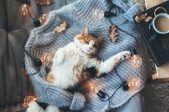 Lat katt som sover på den woolen tröjan Arkivfoton