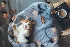 Lat katt som sover på den woolen tröjan Arkivbilder