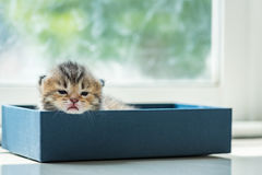 Lat kattunge i ask Arkivfoto