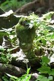 700 lat rujnował antyczną kamienną Buddha głowy statuy zieleni świeżości drzewnego liścia kwotę podczas lata, łamam ciało sztuki  Zdjęcia Stock