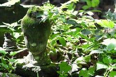 700 lat rujnował antyczną kamienną Buddha głowy statuy zieleni świeżości drzewnego liścia kwotę podczas lata, łamam ciało sztuki  Obrazy Royalty Free