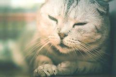 Lat sova för katt Fotografering för Bildbyråer