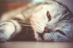 Lat sova för katt Royaltyfri Fotografi