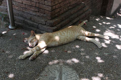 Lat sova för kattunge Arkivfoton