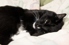 Lat svartvit katt som gäspar på säng Royaltyfri Bild