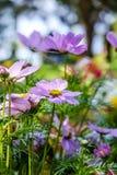 Lat wildflowers portret Fotografia Royalty Free