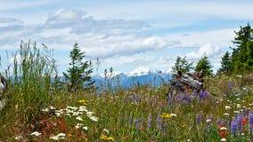 Lat wildflowers Zdjęcia Royalty Free