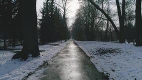 Latać między drzewami w parku zdjęcie wideo