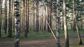 Latać na trutniu między drzewami zdjęcie wideo