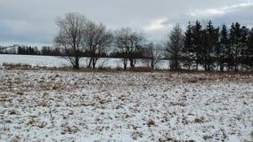Latać nad łąkami grupa drzewo zdjęcie wideo
