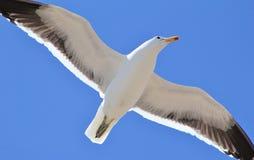 Latać nad Afryka - Seagull zdjęcia royalty free