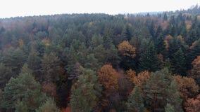 Latać nad pięknym widokiem 4k pięknym lasem i zbiory