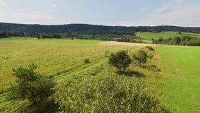 Latać nad pogodną łąką i drzewami Krajobrazowy widok z lotu ptaka zbiory wideo