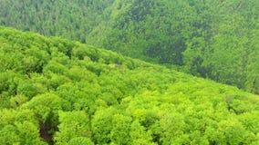 Latać nad zielonym bukowego drzewa lasem w wiośnie Powietrzny 4k trutnia widok zdjęcie wideo