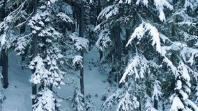 Latać Przez Śnieżnych drewien W zimie zbiory