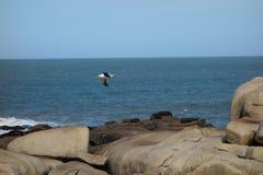 Latać seagull obraz stock