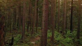 Latać w dół parkowych drzewa przy zmierzchem zbiory wideo