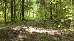 Latać w lasowym Gładzi równomierny krzywka strzał i pości Czysty i jaskrawy dzień zbiory wideo