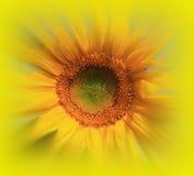 Lata światło słoneczne Zdjęcie Royalty Free