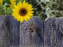 Lata światło słoneczne zdjęcie stock