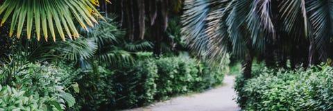 Lata życia tropikalny tło obraz stock