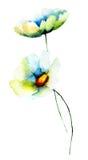 Lata Chamomile kwiaty Zdjęcie Royalty Free