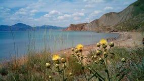 Lata com flores amarelas, o Mar Negro, Crimeia fotografia de stock