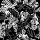 Lata czarny i biały tropikalny drzewko palmowe opuszcza bezszwowy tupocze Zdjęcie Royalty Free