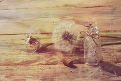Lata dandelion na drewnianym stole Zdjęcia Royalty Free
