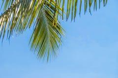 Lata drzewko palmowe w chmurach z kopii przestrzenią i niebieskim niebie Minimalny pojęcie Pasteli/lów brzmienia Zdjęcia Royalty Free