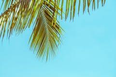 Lata drzewko palmowe w chmurach z kopii przestrzenią i niebieskim niebie Minimalny pojęcie Pasteli/lów brzmienia Fotografia Royalty Free
