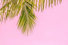 Lata drzewko palmowe w chmurach z kopii przestrzenią i niebieskim niebie Minimalny pojęcie Pasteli/lów brzmienia Zdjęcia Stock